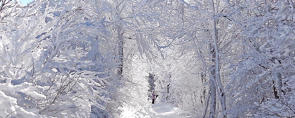 Zaczynamy półkolonie narciarskie – info dla rodziców
